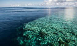 Coral Reef Drop Off, Wakatobi