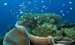 Wakatobi Coral