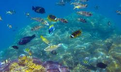 Diving in Exuma, Bahamas