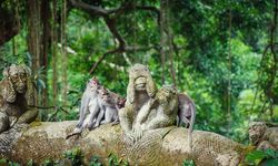 Monkeys in Ubud