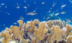 Coral Reef, Abacos Island