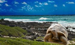 Tortoise on Beach