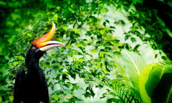 Picture of a tropical bird in Borneo