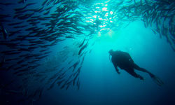 Diving with a school of jacks