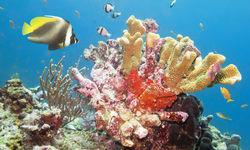 Coral and Fish, Similian Islands, Thailand