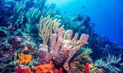 Colourful coral, Bonaire