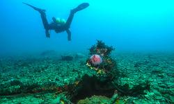 Diving in Norway