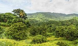 Lush green landscape