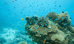 Coral Reef, Zanzibar