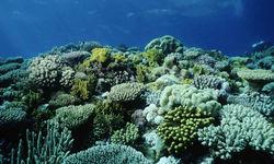 Coral Garden, Papua New Guinea