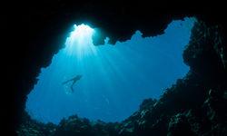 Belizean coast snorkeling sights