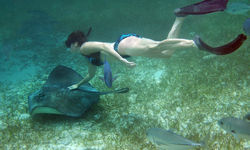 Diving with a Stingray