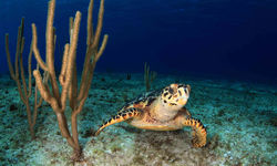 Diving in Little Cayman