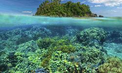 Coral Reef, Underwater, Philippines
