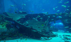 Diving in New Providence, Bahamas