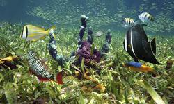 Mix of fish underwater