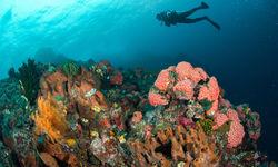 coral reef ambon