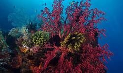 coral reef forgotten islands