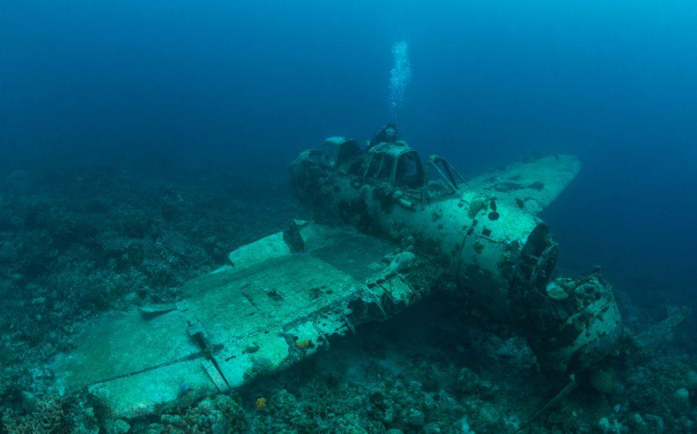 palau diving original diving