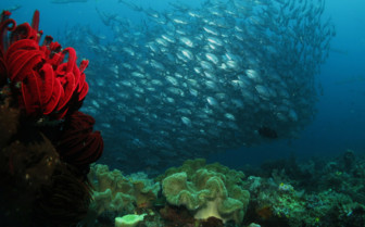 Picture of a School of Fish at Sorido Bay