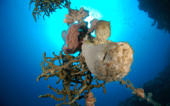 Picture of the coral, diving off Aquacat
