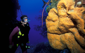 Picture of the coral, diving from Aquacat