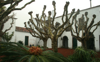 Picture of the Garden at Convento de Sao Francisco
