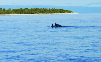 Picture of Diving with Dolphins at Ananyana Beach Resort