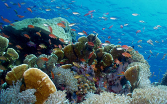 Picture of diving at Palau Pacific Resort