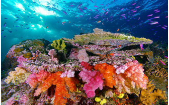 Picture of stunning soft corals at Namena Marine Reserve