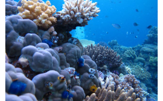 Picture of stunning reef at Jean Michel Cousteau Resort in Fiji