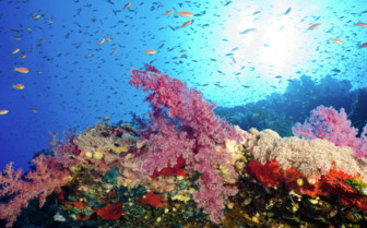 Picture of Reef and Fish Red Sea Aggressor