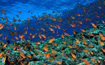 Picture of Reef Red Sea Aggressor