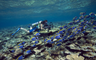 Picture of Angsana Ihuru coral reefs