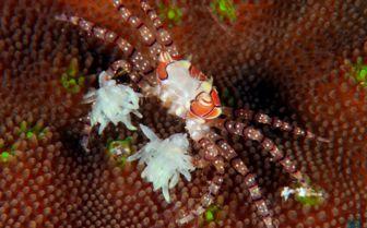Macro Scuba Diving, Siladen