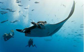 Diving with Manta Ray, Mexico