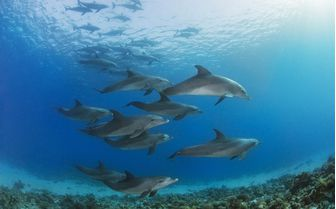 Dolphins in Madagascar