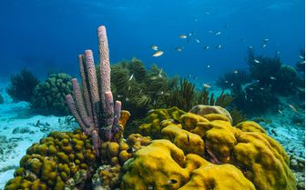 Diving in Abacos Island