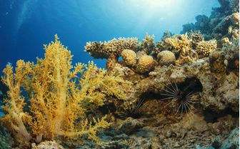Coral reef, Curacao