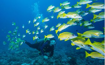 Diving, Micronesia