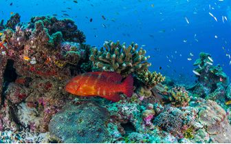 Alphonse_colourful_coral_and_fish