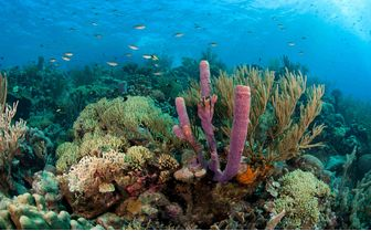 Colourful coral reef in Grenada