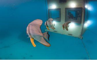manta_fish_swimming_past_underwater_room