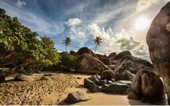 Palm tree lined beach