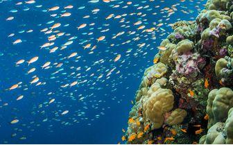 manta_coral_fish