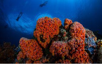 Bangka_Diving