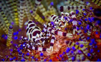 Lembeh_Macro_Diving
