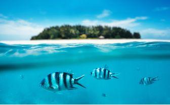 Fish underwater, Zanzibar