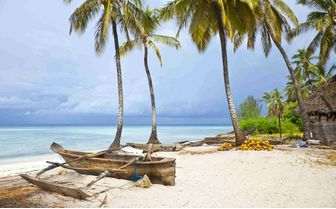 Palm Trees on Zanzibar Beach