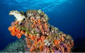 Coral, Bali, Indonesia